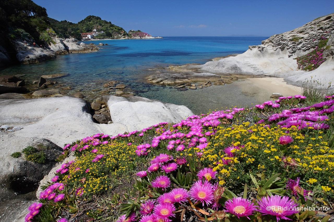 Fiori Gialli Isola Delba.Isola D Elba Fioritura Ginestre