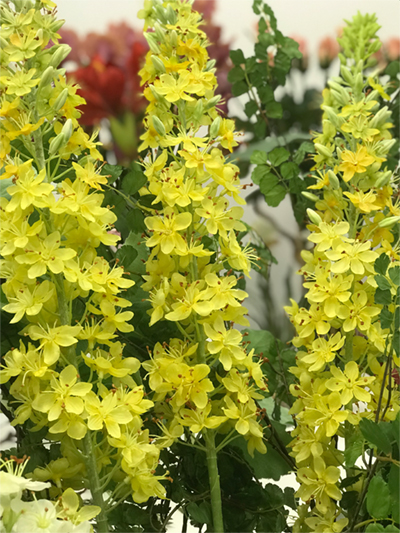 déco Fleurs Fiori artificiali eremurus