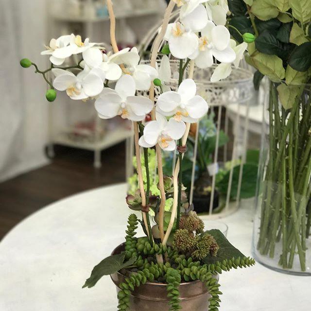 sandrabalduccifiori orchidea bianca e piante grasse artificiali
