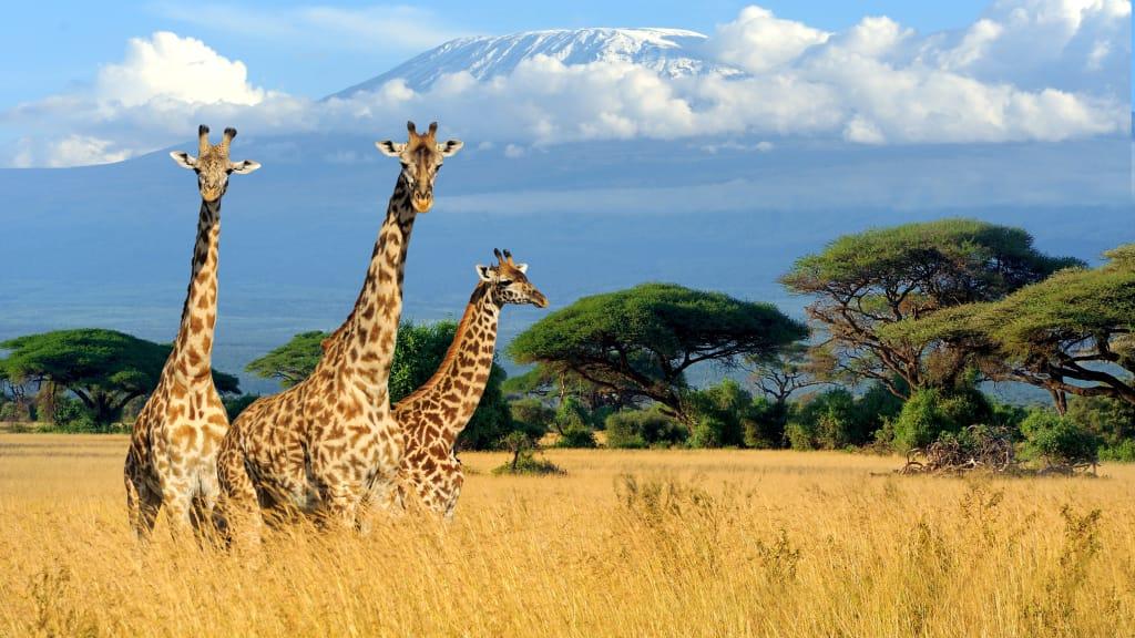 MAL D'AFRICA IN KENYA