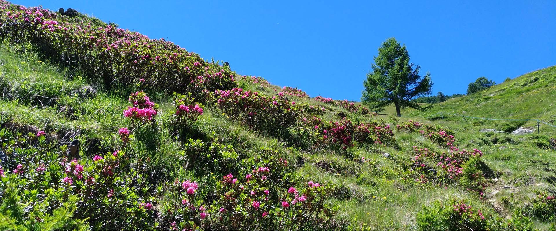 SAPORI DI MONTAGNA - linea Montagne Golose