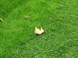 Con il clima change anche la nostra erba è sempre più verde
