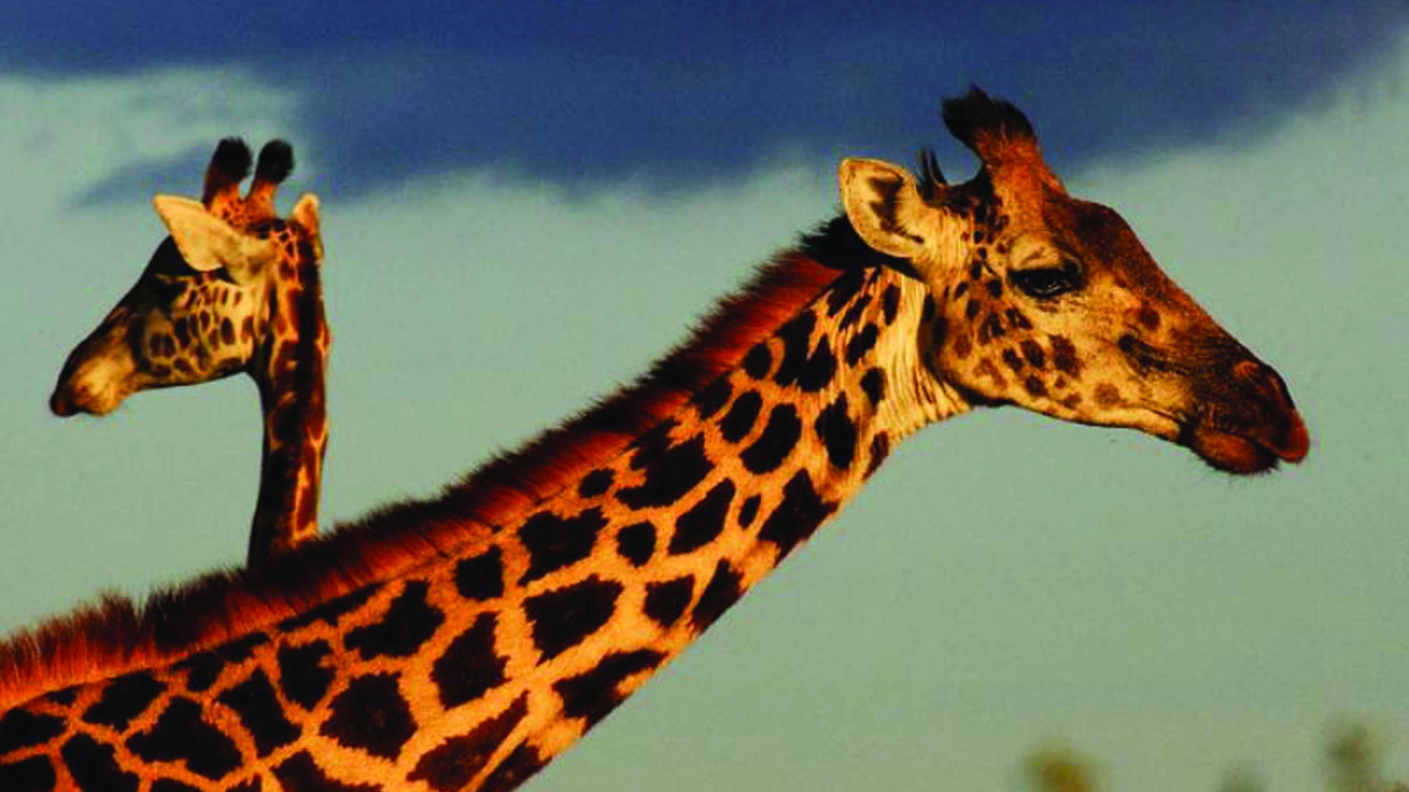 ZanzibarViaggi - Safari su misura