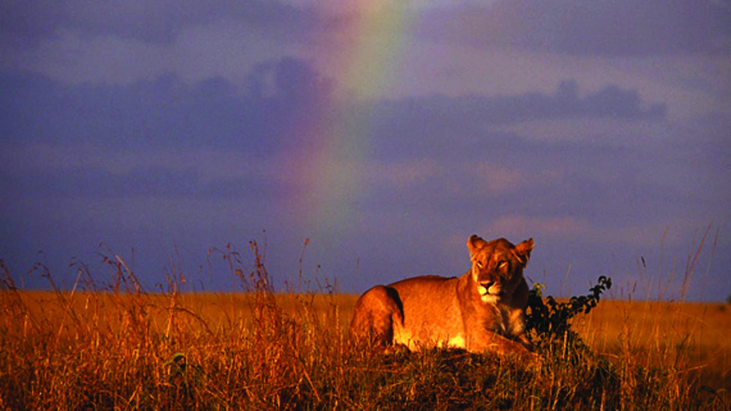 ZanzibarViaggi - Safari
