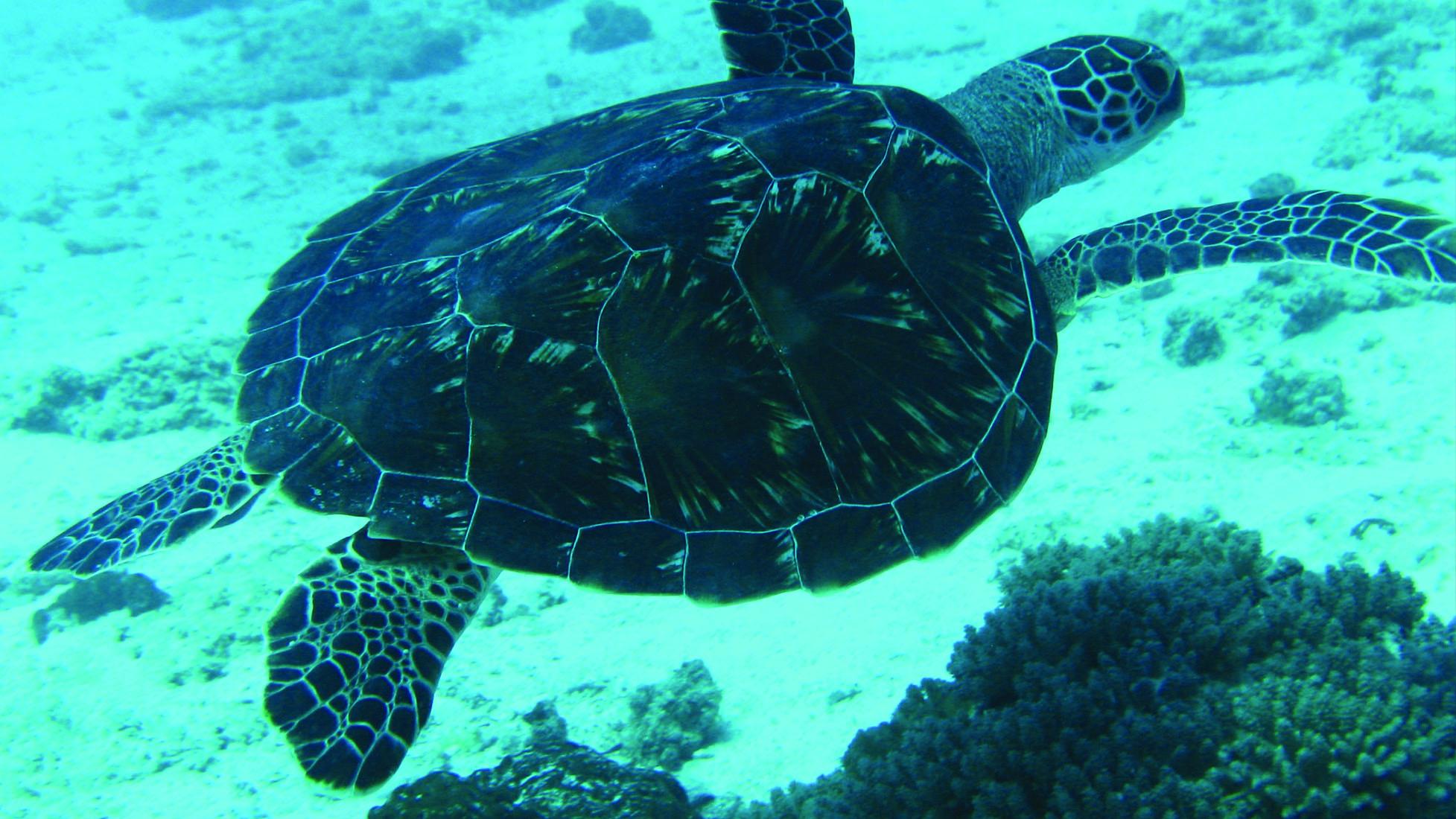 ZanzibarViaggi - Diving