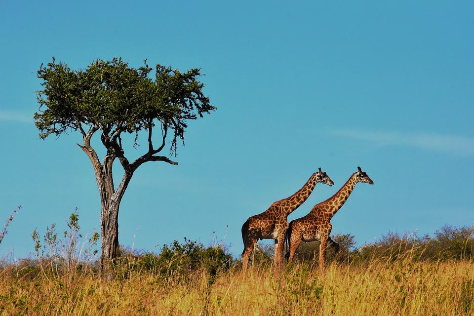 Tanzania: cosa aspettarsi