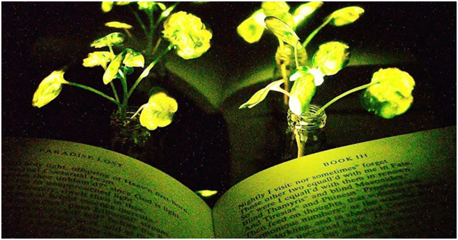 Engineers have created plants that illuminate