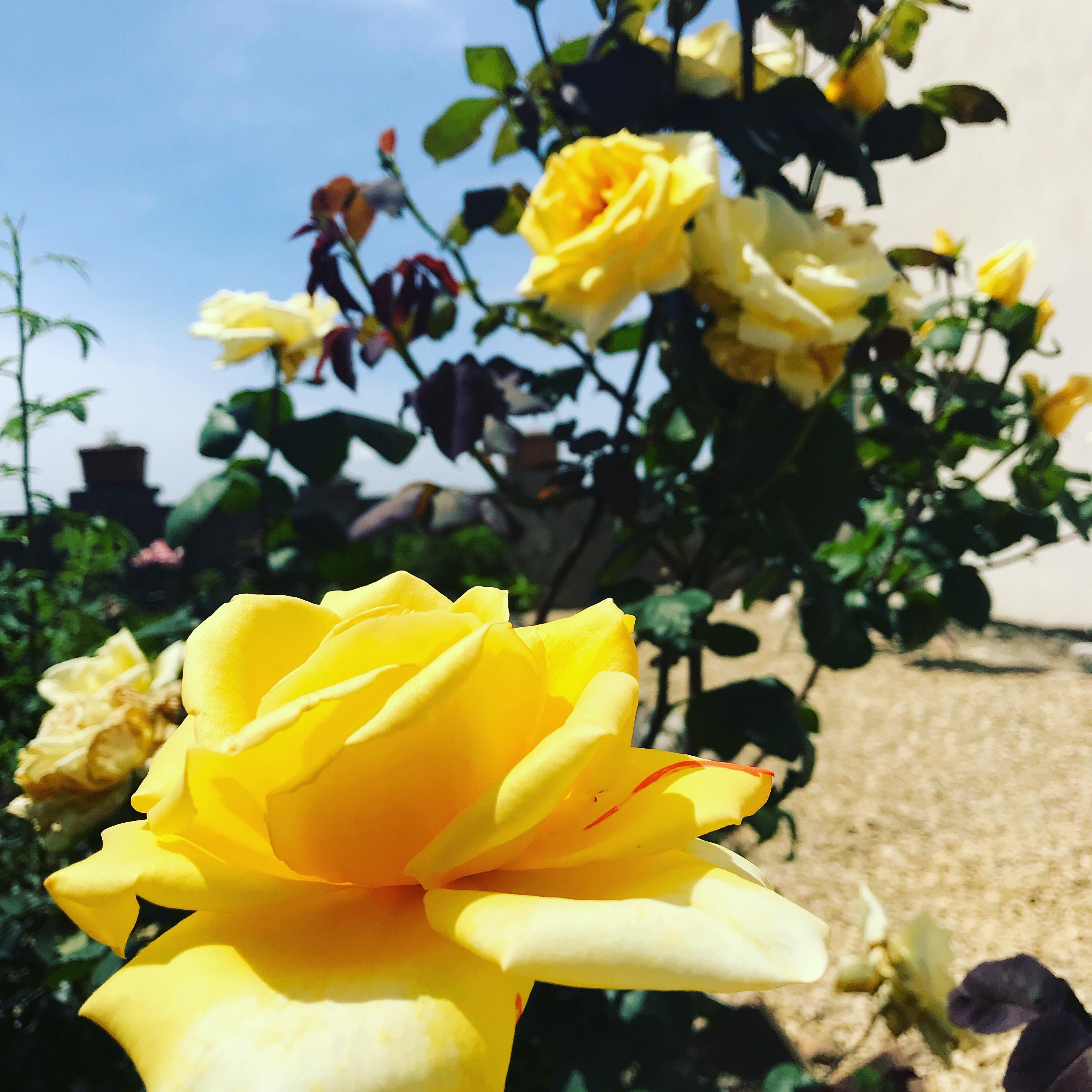 Domenica 10 ottobre, giardino d'autunno