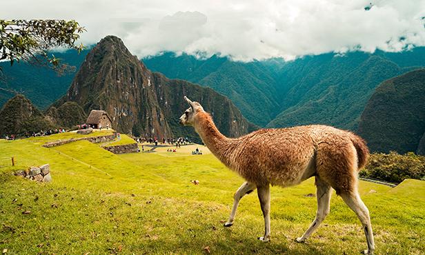 IL CUORE DEL PERU'