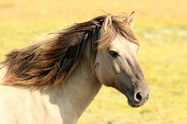 Maniaci dei Viaggi - Cavallo